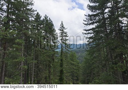 Natural Landscape With Black Pines In Epirus, Ioannina, Greece