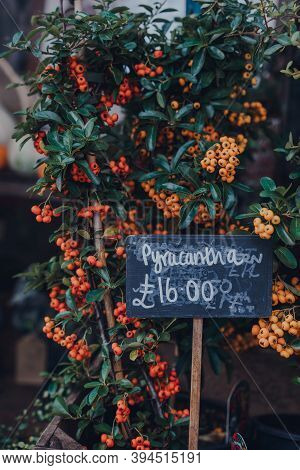 Price Tag On A Pyracantha Plant On Sale At A Street Market In Frome, Somerset, Uk. Selective Focus.