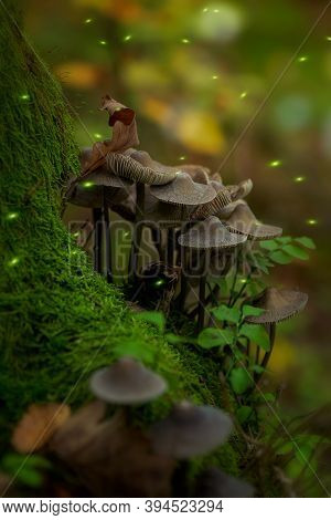 Magical Forest With Mushrooms In The Moss And Fireflies