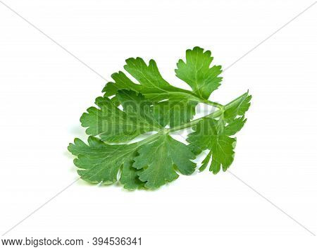 Leaf Coriander Or Cilantro Isolated On White Background ,green Leaves Pattern