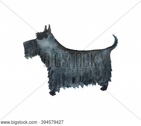 Watercolor Image Of Scottish Terrier Isolated On White Background. Hand Drawn Catroon Illustration