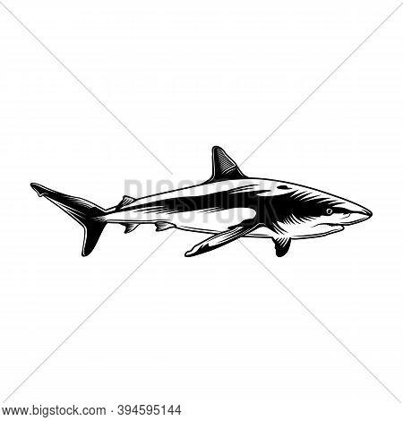 Monochrome Shark Vector Illustration. Retro Predator Fish Or Tiger-shark For Sticker. Hawaii, Wildli