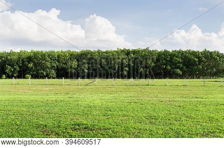 Empty Dry Cracked Swamp Reclamation Soil, Land Plot For Housing Construction Green Meadow, Beautiful
