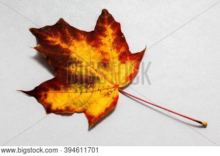Autumn leaf on background from blue paper