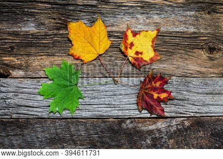 Four autumn colored leaves on wooden background