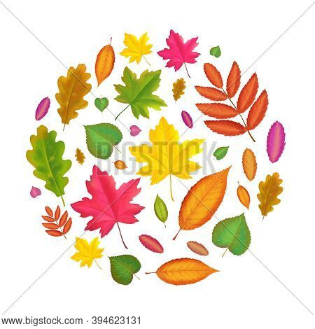 Autumn Leaves Round Background. Fall Leaf Design. Maple, Oak, Rowan Elm Yellow And Red Foliage Vecto