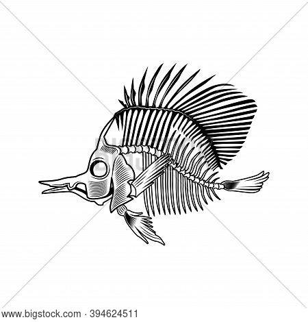 Flatfish Bones Vector Illustration. Fish Skeleton, Chord, Fins, Head And Tale. Dead Animal Or Food C