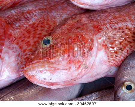 Red Fish In Fish Market