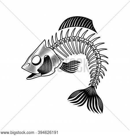 Bass Bones Vector Illustration. Curled Fish Skeleton, Chord, Fins, Head And Tale. Dead Animal Or Foo