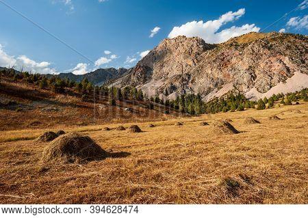 Mountain Meadow Bale Of Hay Harvest Field Near Sary Chelek Lake, Sary-chelek Jalal Abad Region, Kyrg
