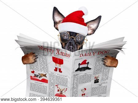 Christmas Prague Ratter , Prager Rattler Santa Claus  Dog Reading A Newspaper Or Magazine ,isolated