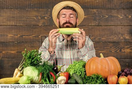 Homegrown Organic Harvest Benefits. Farmer Hold Corncob Or Maize Wooden Background. Farmer Presentin