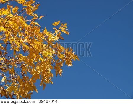 Autumn Leaves On Blue Sky With Copy Space.