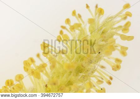 Macrophotography Of Flower Stamens Close Up Colorful View.