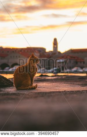 Orange Cat Standing By The Sea In The Harbour Of Dubrovnik Town, Observing The Golden Sunset Above T