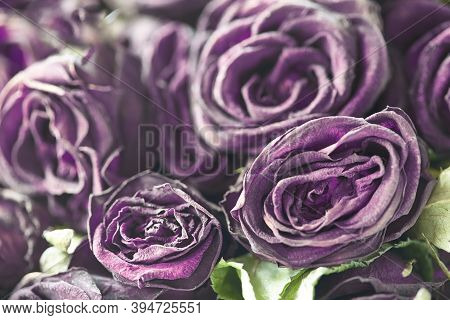Floral Background. Withered Roses. Dried Roses.blurred Floral Background. Purple Lilac Floral Backgr