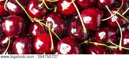 Red Ripe Berries Of A Sweet Cherry Close Up. Macro Photo Of Sweet Cherry, Red Berry Background