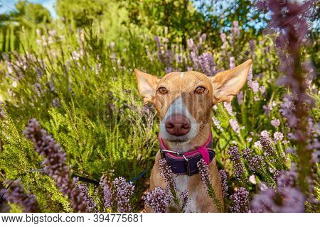 Dog In Nature In A Campsite With Very Bright Colors