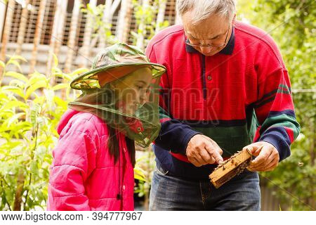 Experienced Beekeeper Grandfather Teaches His Granddaughter Caring For Bees. Apiculture. The Concept