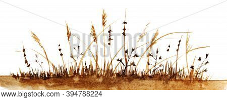 Watercolor Autumn Landscape In Brown Shades. Withered Grass With High Ripe Spikelet On White Backgro