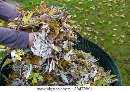 Collecting autumn foliage