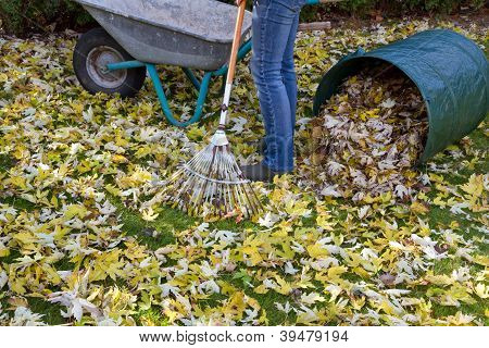 Woman raking autumn foliage in the garden