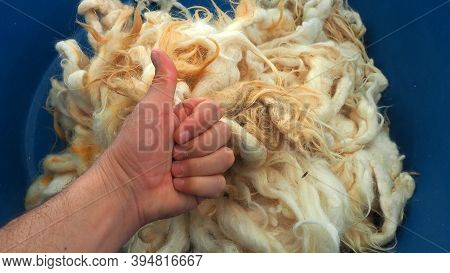 Natural And Pure Sheep Wool, Washed Cleaned Sheep Wool,