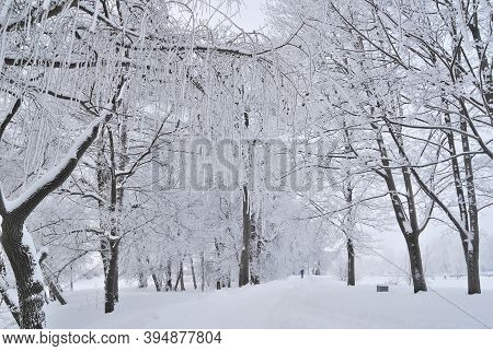 Beautiful Trees Covered With Frost In A Winter Park