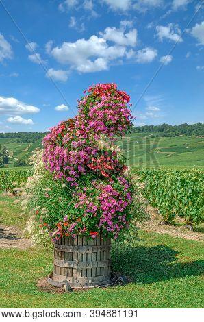 Vineyard Landscape In Champagne Region Near Epernay,france