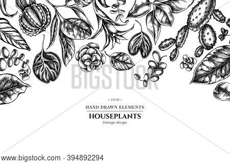Floral Design With Black And White Ficus, Iresine, Kalanchoe, Calathea, Guzmania, Cactus Stock Illus