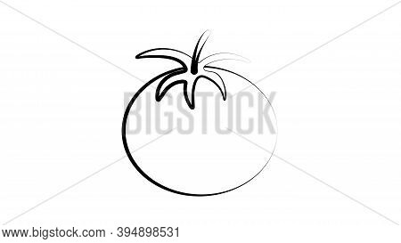 Sketch Style Drawing Of Shiny Ripe Tomato, Vector Illustration Isolated On White Background. Appetiz