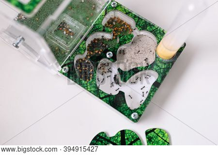 Acrylic Ant Farm, Formicarium With Reaper Ants Decorated Arena And Test Tube For Drinking Ants Stand