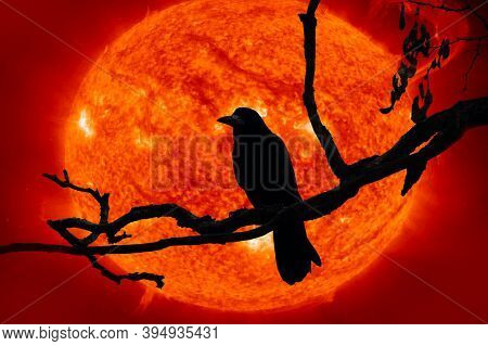 Crow On A Branch On Background Of Energy Ball From Outer Space. Halloween Is Coming Soon And Abstrac