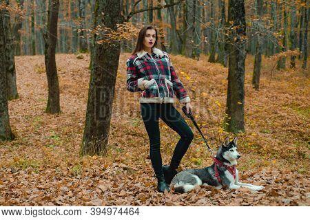 Siberian Husky Favorite Pet. Animal Husbandry. Girl Pretty Stylish Woman Walking With Husky Dog Autu