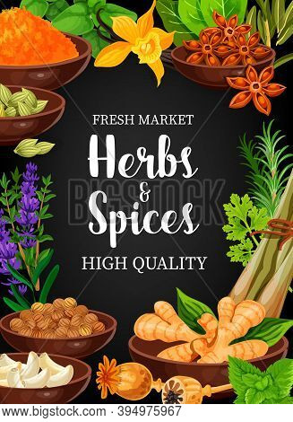Herbs And Vector Seasonings Anise, Vanilla, Lavender And Turmeric, Ginger, Anis And Vanilla. Coriand