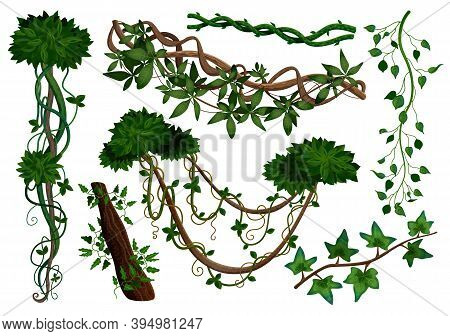 Tropical Rainforest Jungle Vegetation Climbing Plants Twining Lianas Realistic Elements Set With Hed