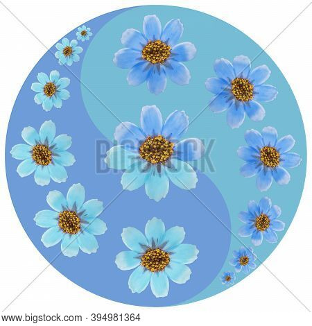 Floral Symbol Yin-yang. Cosmos. Geometric Pattern Of Yin-yang Symbol, From Plants On Colored Backgro