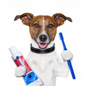 teeth cleaning dog with toothpaste and toothbrush poster