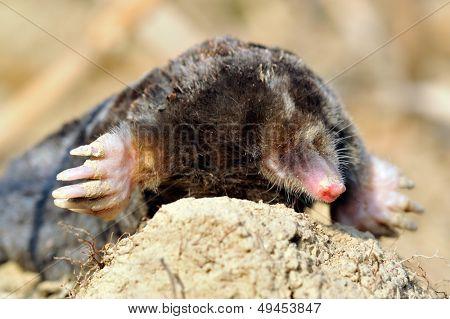 mole outdoor