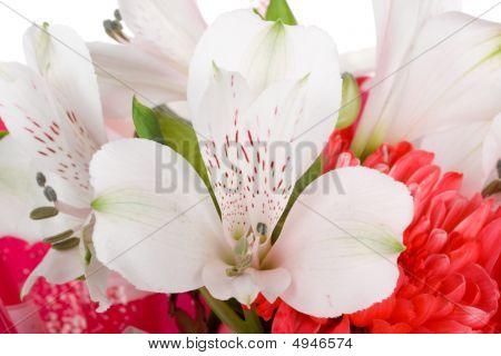 Close-up Wedding Bouquet