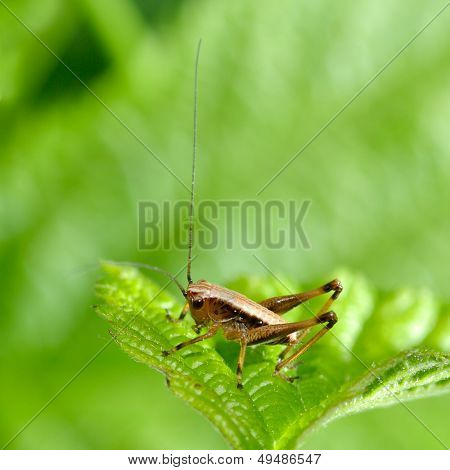 grasshopper on green leaf