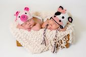 Sleeping fraternal twin newborn baby girls wearing crocheted pig and cow hats. poster