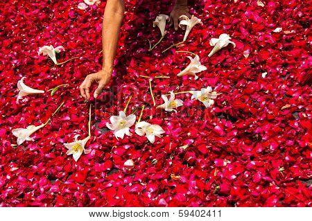 Making A Holy Week Processional Carpet Of Rose Petals
