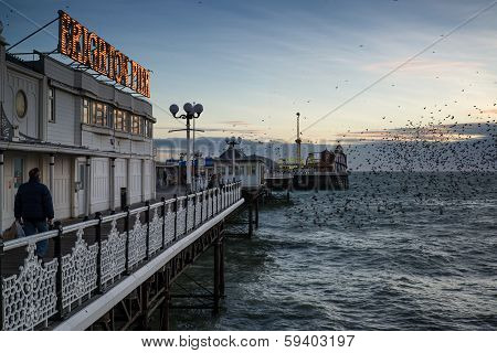 Starling Murmuration Over Brighton Pier During Winter Sunset.