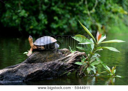 Turtle Plant