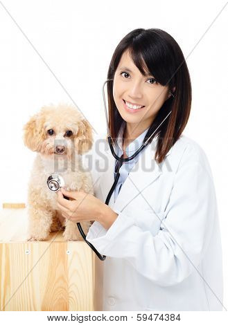 Female veterinarian diagnosis poodle dog poster