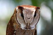 Unique owl portrait poster