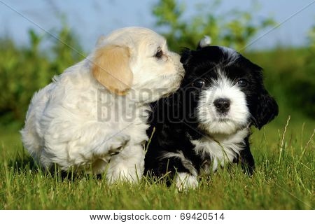 Two sweet puppy dogs in nature.