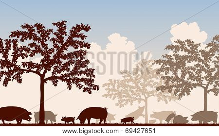 Illustration of free-range pigs feeding under fruit trees