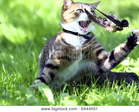 Cat Was Hunting